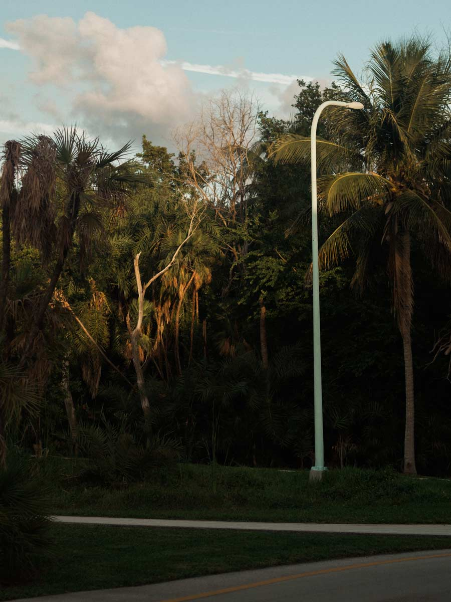 Trees lining Crandon boulevard viewed from Calusa Park