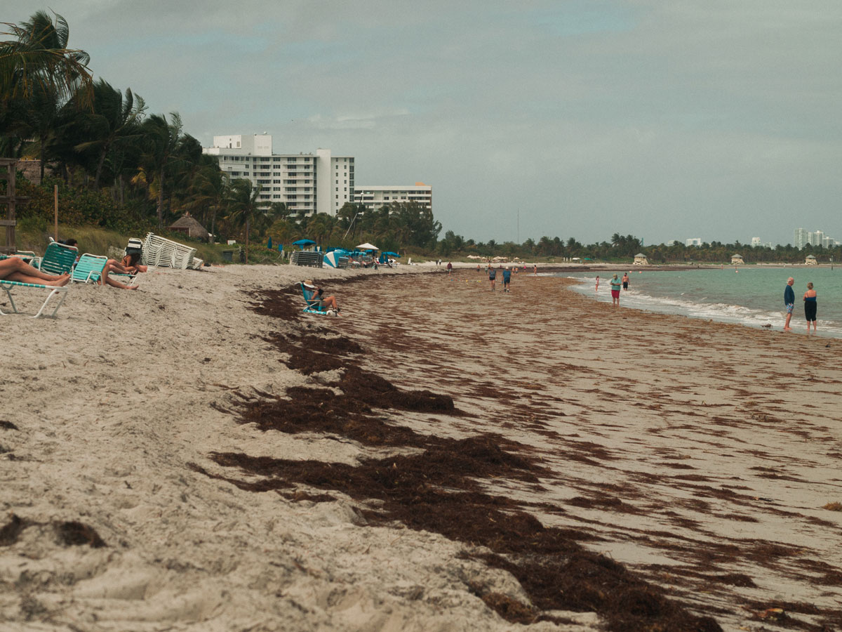 First seaweed of the year in Key Biscayne 2020