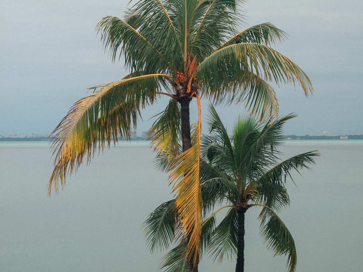 Palm trees and Biscayne Bay view from Key Biscayne Yacht Club May 2020