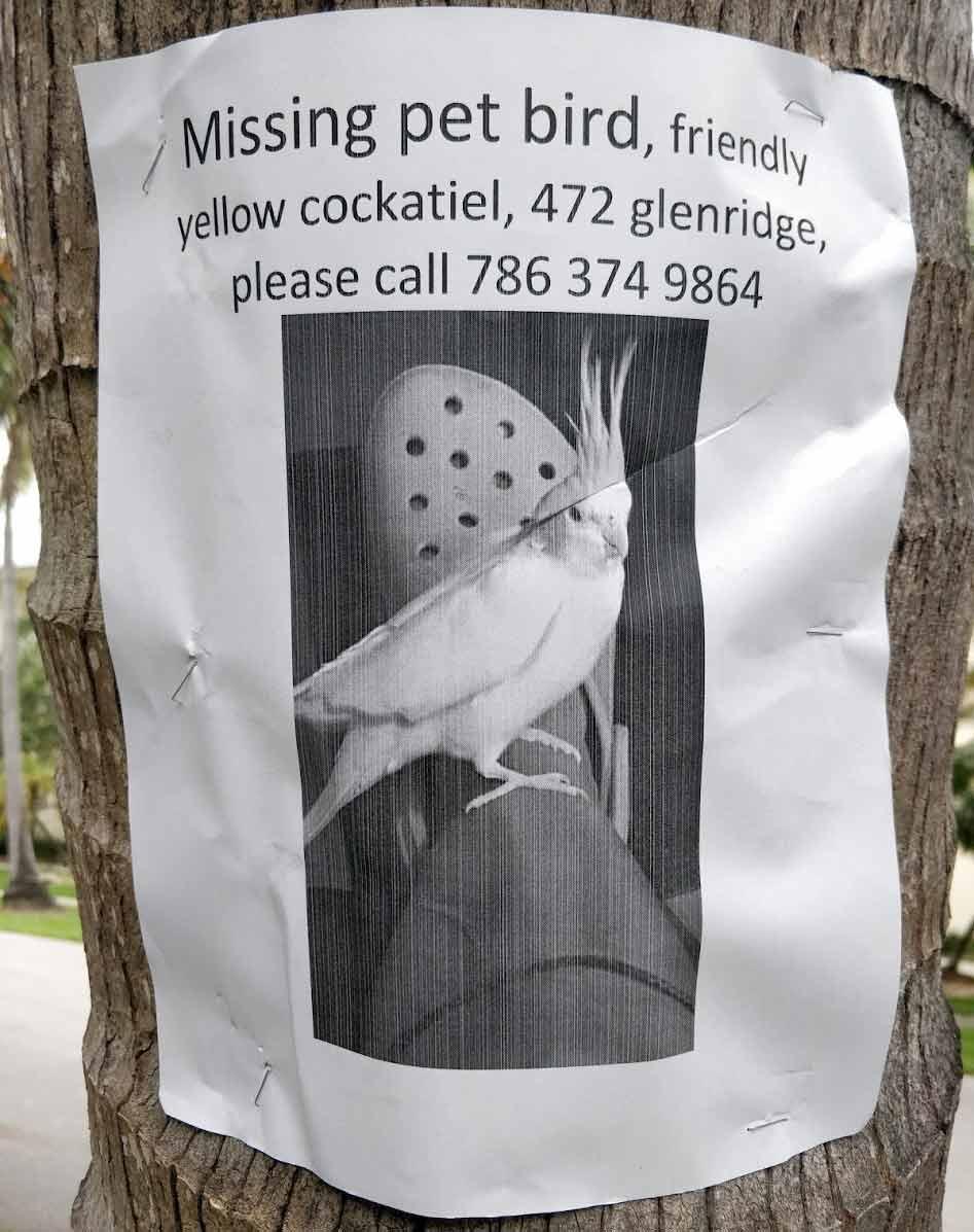 Missing cockatiel sign in Key Biscayne Sept. 2020