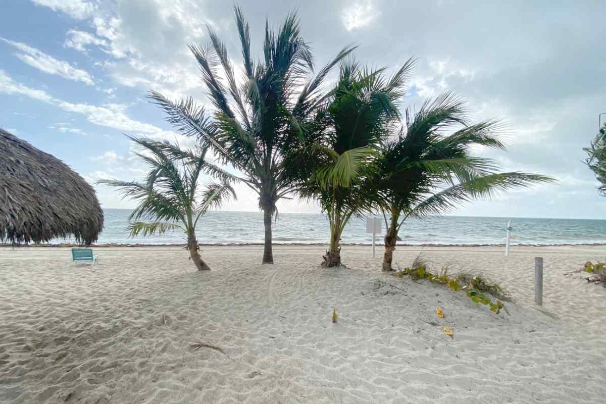 Palm trees at KB Beach Club April 2021