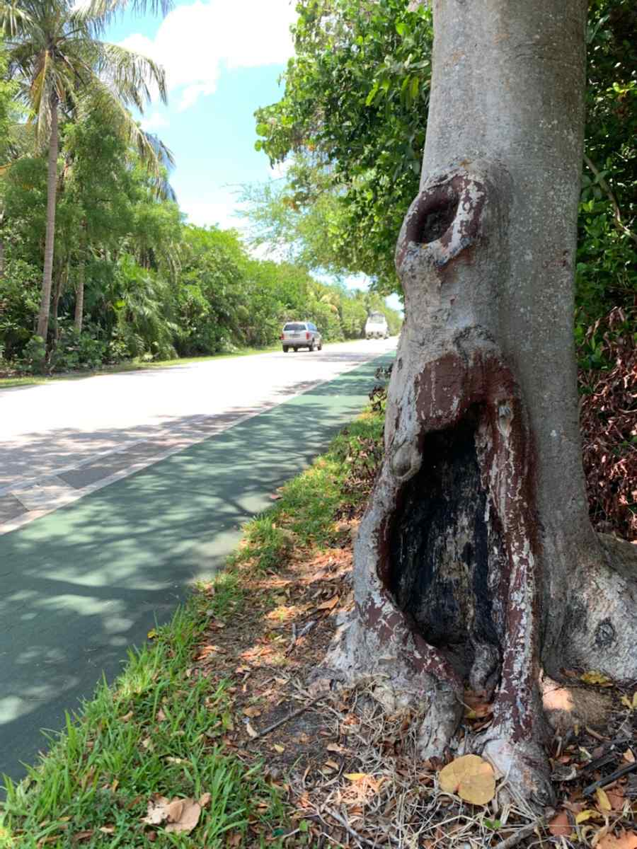 Tree on Crandon Blvd