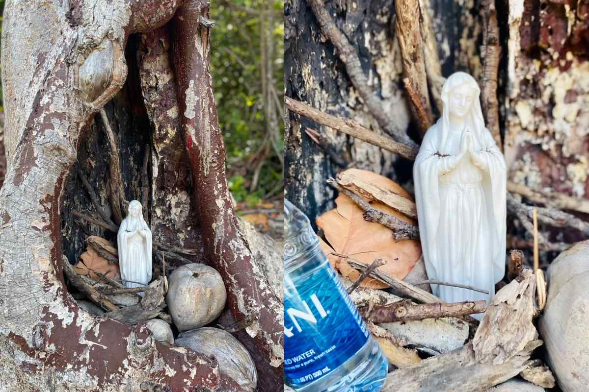 Sacred tree Key Biscayne