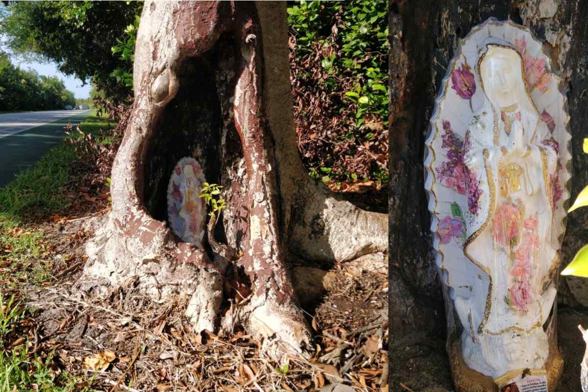 Key biscayne virgin mary tree crandon