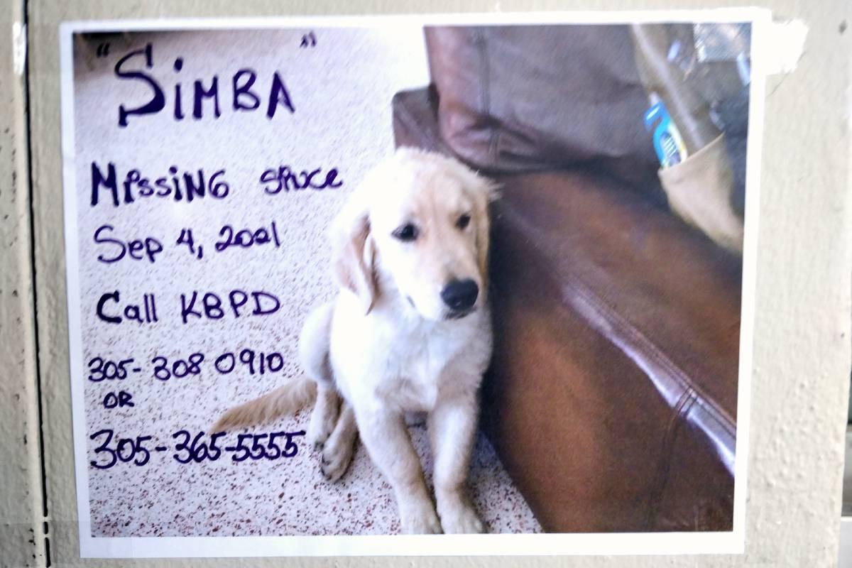 Lost dog Key Biscayne Sept. 2021